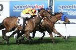BufferingMoir StakesGroup 126 09 2014WINMoonee Valley5207 Copy